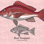 TIPS FOR CATCHING SNAPPER