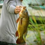 TOP FRESHWATER FISH WITH FIGHTING CAPACITY TO CATCH ACROSS AUSTRALIA