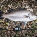 QUICK GUIDE TO CATCHING BARRAMUNDI