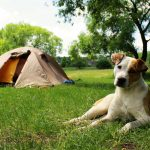 QUICK GUIDE TO CAMPING WITH YOUR DOG