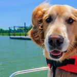 QUICK GUIDE TO DOG FLOATATION DEVICES AND DOG LIFEJACKETS