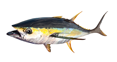 TUNA, YELLOWFIN
