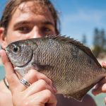 TIPS FOR CATCHING BREAM ON SOFT PLASTIC FISHING LURES
