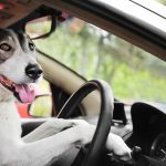 DOG ON THE ROAD TRIP TIPS