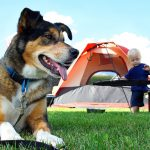 THINGS TO CONSIDER BEFORE YOU TAKE YOUR DOG CAMPING