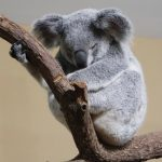 COMMON AUSTRALIAN ANIMALS YOU'VE NEVER HEARD OF