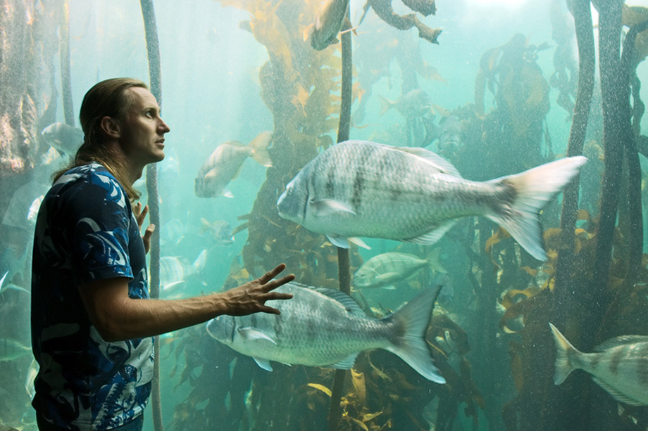 Man Studies Fish Aquarium