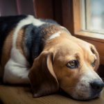 QUICK GUIDE TO SEPARATION ANXIETY IN DOGS