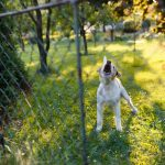 STOP THE YAPPING: WAYS TO STOP YOUR DOG BARKING