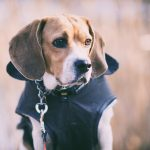 FUNCTIONAL CLOTHES FOR YOUR DOG