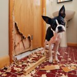 HOW TO STOP YOUR DOG CHEWING YOUR HOUSE DOWN
