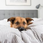 THE TRUTH BEHIND DOGS SHARING THEIR OWNERS BED