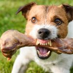 TRAINING FOOD AGGRESSION OUT OF DOGS