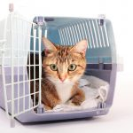 QUICK GUIDE TO CHOOSING A CAT CARRIER
