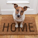 ADVANTAGES OF HAVING A DOG AROUND THE HOUSE