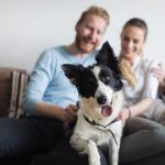 WAYS TO SAVE ON THE COST OF OWNING A DOG