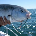 Fish Caught With Trebles