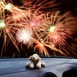 TAKING CARE OF YOUR DOG DURING THE FIREWORKS