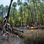 kayak fishing mangroves