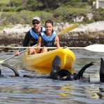 YOUR RELATIONSHIP WITH WILDLIFE WHILE OUT KAYAKING