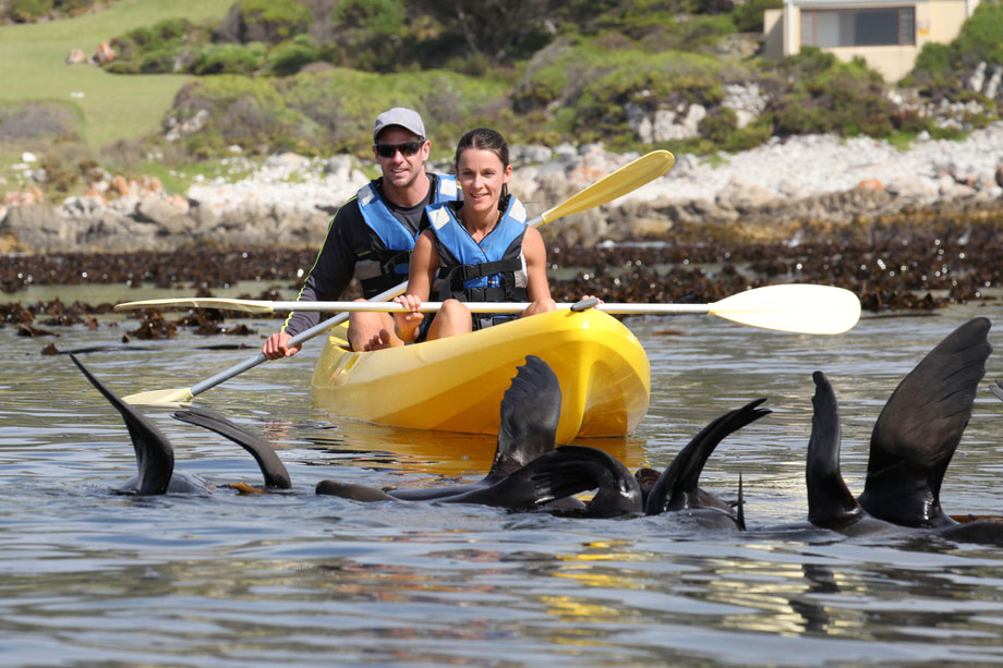 Relationship With Wildlife Kayaking