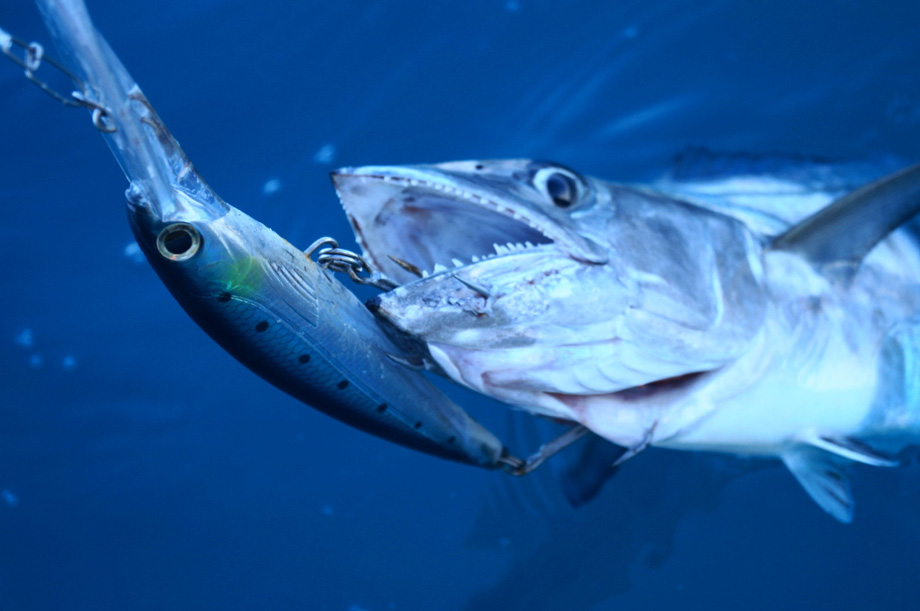 how to fish for mackerel from a boat