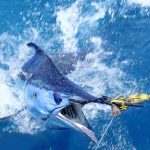 CHASING BLUE MARLIN OFF THE GOLD COAST