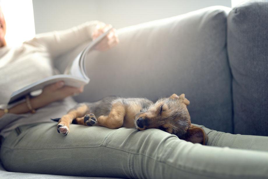 Dog Sleeping Womans Lap