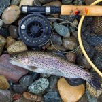 THE LINK BETWEEN TROUT BEHAVIOUR AND WATER TEMPERATURE