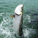 TIPS FOR FISHING TARPON