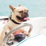 7 TIPS FOR BOATING WITH YOUR DOG