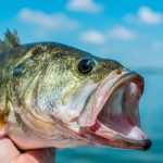 QUICK GUIDE TO BASS FISHING IN AUSTRALIA