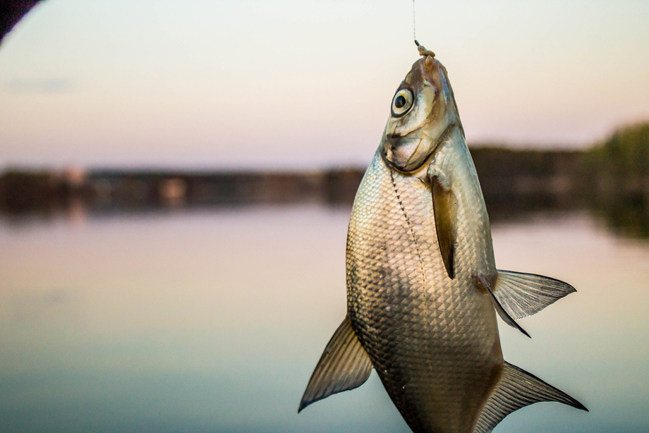 BREAM FISHING 101 FEATURE (1)
