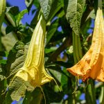 POISONOUS AND PRICKLY PLANTS TO AVOID WHEN HIKING IN THE OUTBACK