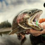 Man Hold Trout