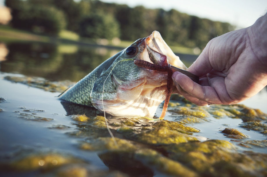 Man Holds A Bass By The Lips Right Above The Waterline