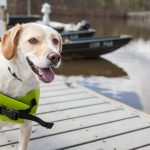 BOATING WITH YOUR DOG: MUST-HAVE ITEMS FOR YOUR CANINE COMPANION