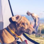 ESSENTIAL TIPS WHEN CAMPING WITH DOGS