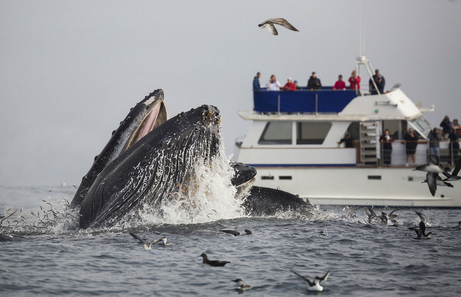 Whale Surfaces While Whalewatchers Look On