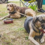 ESSENTIAL THINGS TO DO BEFORE YOU GO CAMPING WITH A DOG