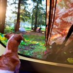 3 DOG-FRIENDLY CAMPING SPOTS IN VICTORIA