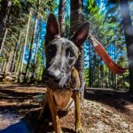 3 DOG-FRIENDLY CAMPING SPOTS IN QUEENSLAND