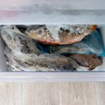 EASY PACKAGING METHODS TO USE WHEN FREEZING FISH