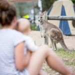 SOME OF THE BEST CAMPSITES WITH AUSTRALIAN NATIVE ANIMALS